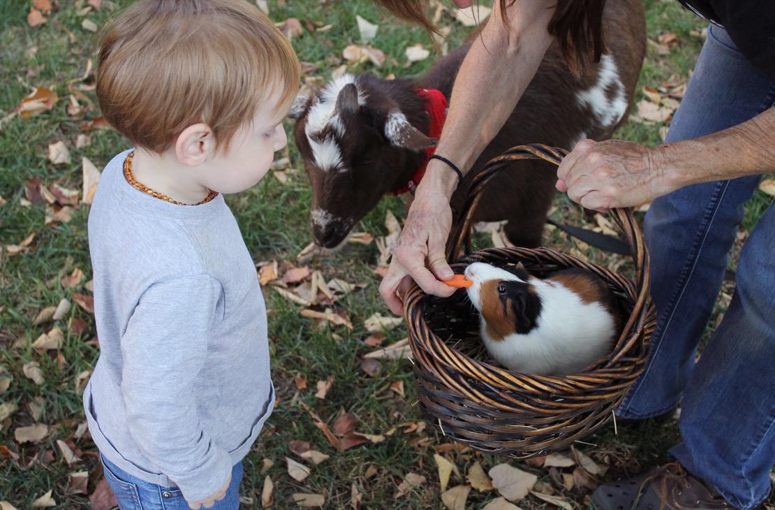 animaux_nourir_enfant.jpg