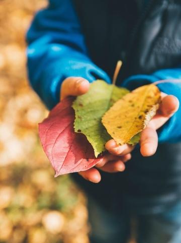 mains avec des feuilles d'automne