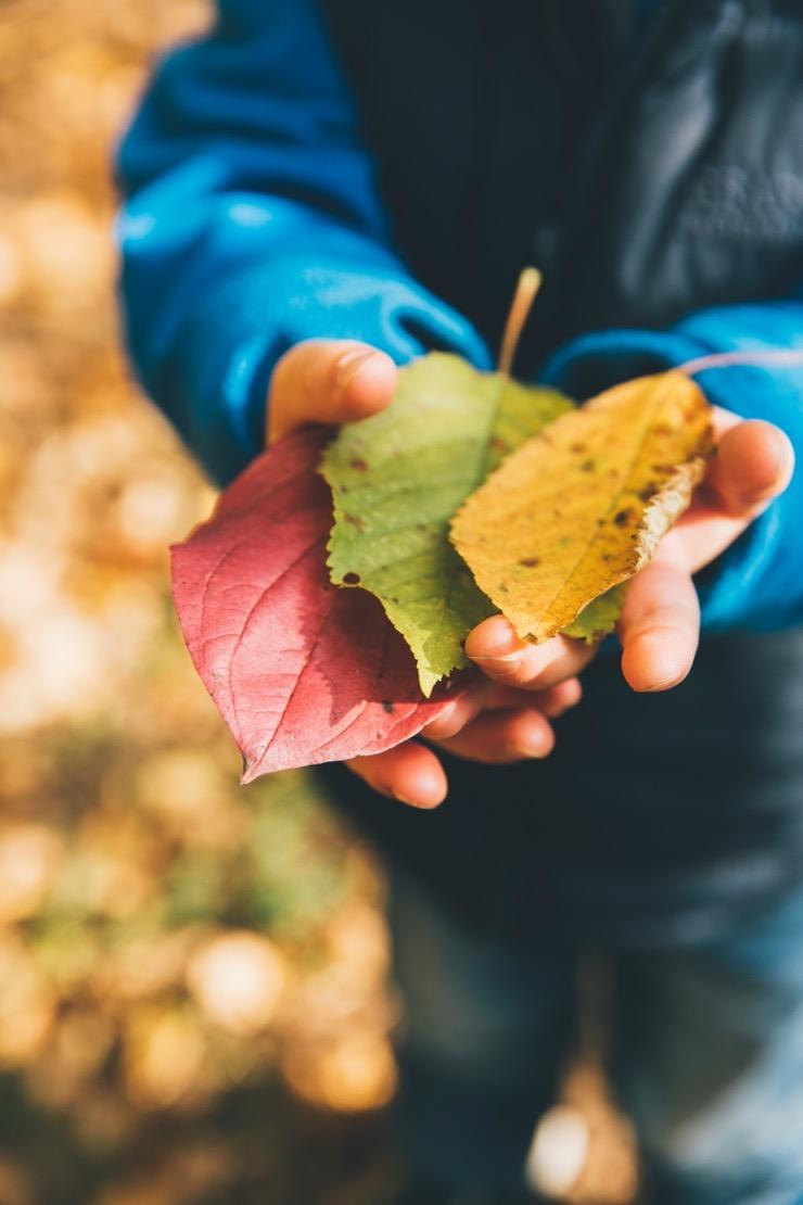 enfant_feuille_nature_automne_mains.jpg