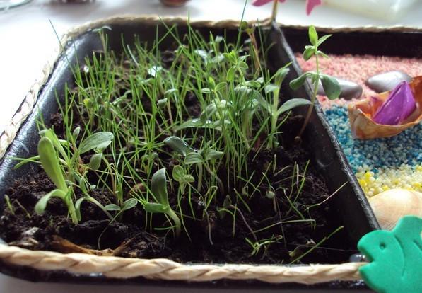 Creche halte garderie micro creche creche priv e multi for Creer mini jardin zen