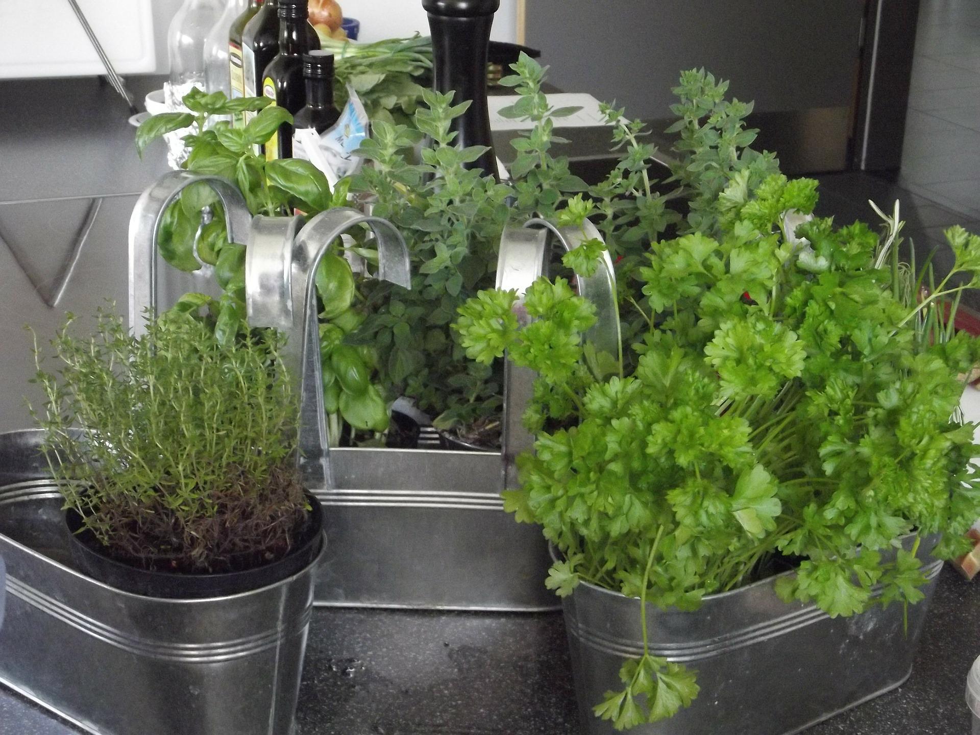 Herbes Aromatiques D Intérieur comment créer un jardin pédagogique en intérieur ?   la